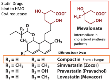 Different Statin Drugs