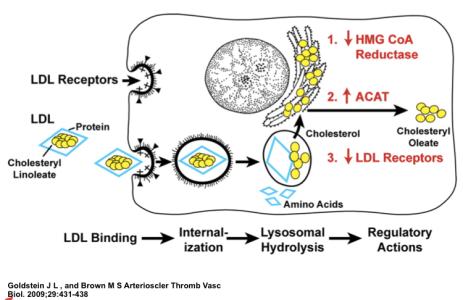 LDL Receptor Scheme