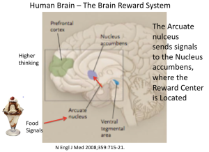 Brain Reward Center NEJM 2008
