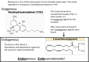 THC Endocannabinoids Figure